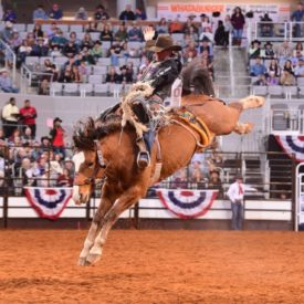 Man getting bucked by a horse in a rodeo